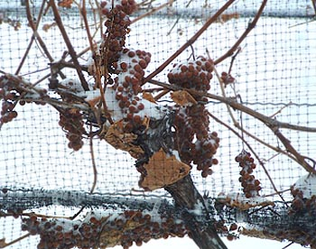 Ice Wine Grapes